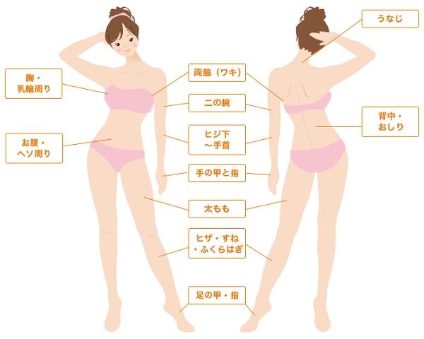 ドクター松井クリニックの全身脱毛の範囲