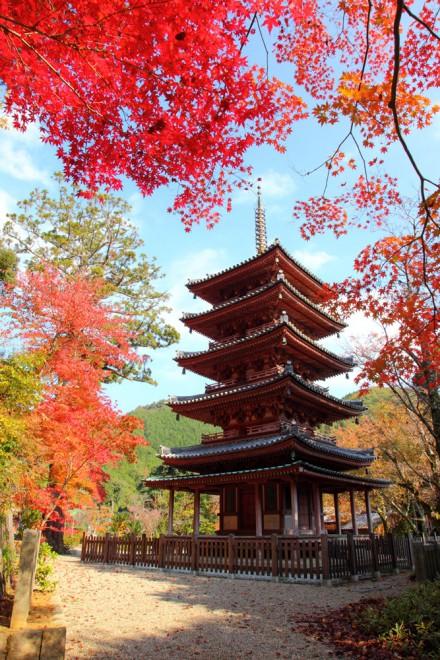 写真提供/(一社)木津川市観光協会