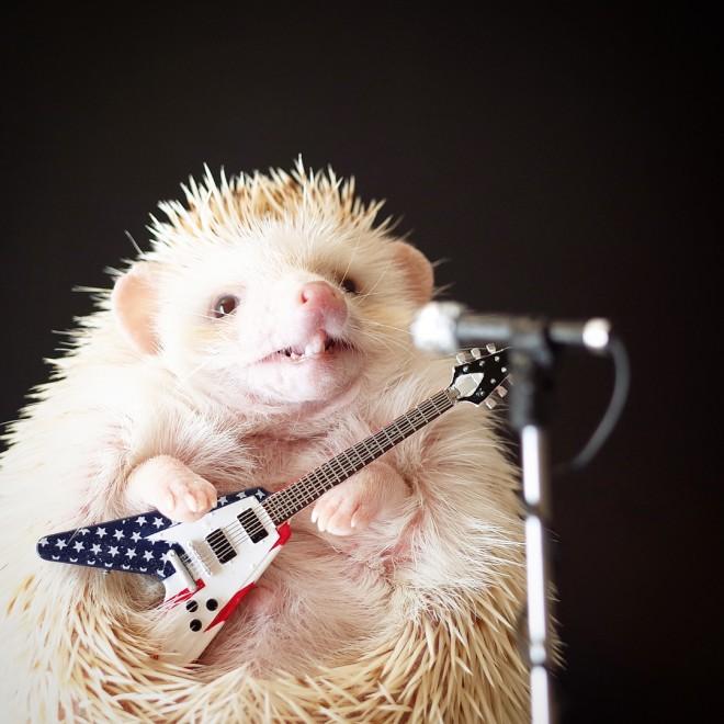 instagramアカウント名:matthewthehedgehog