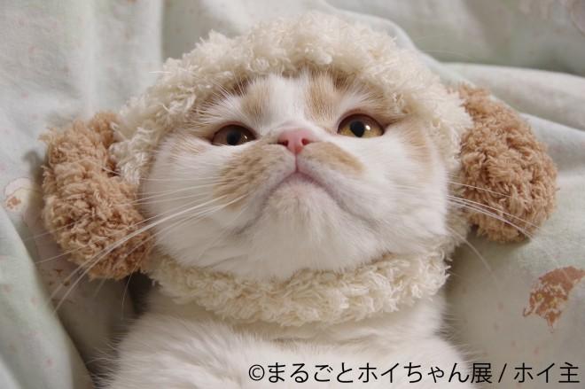 ねこ休み展スピンオフ企画「まるごとホイちゃん展 in 大阪」