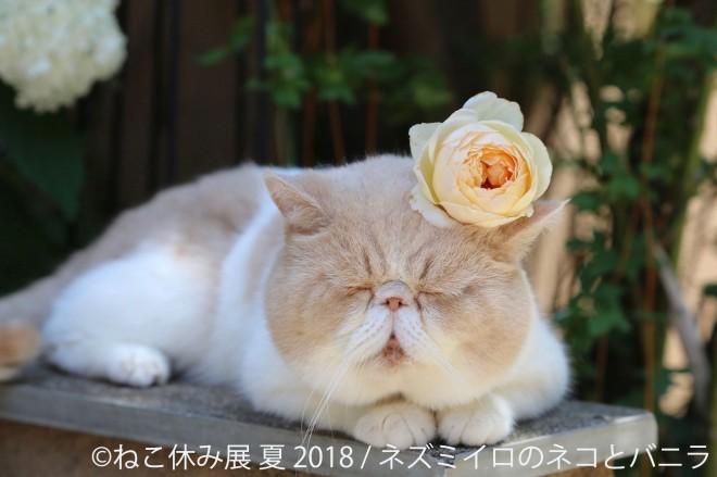 写真展『ねこ休み展 夏 2018』