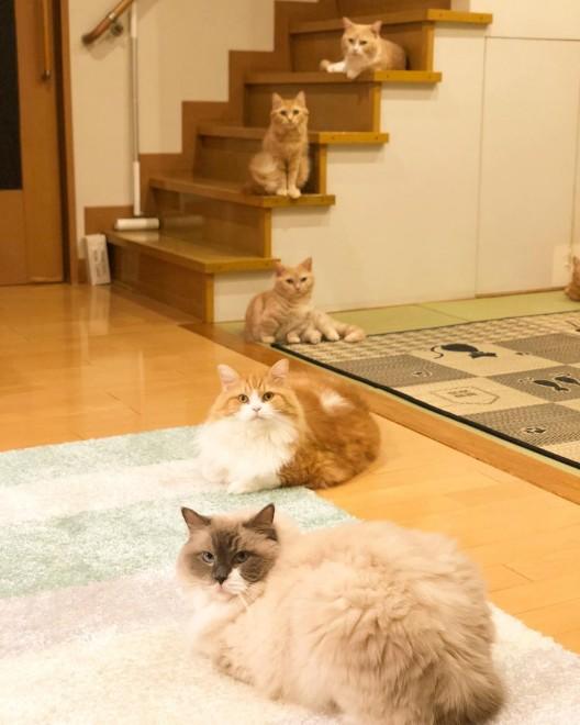 奇跡の一枚!? 家族そろってカメラ目線(@yuriyuri4mama)