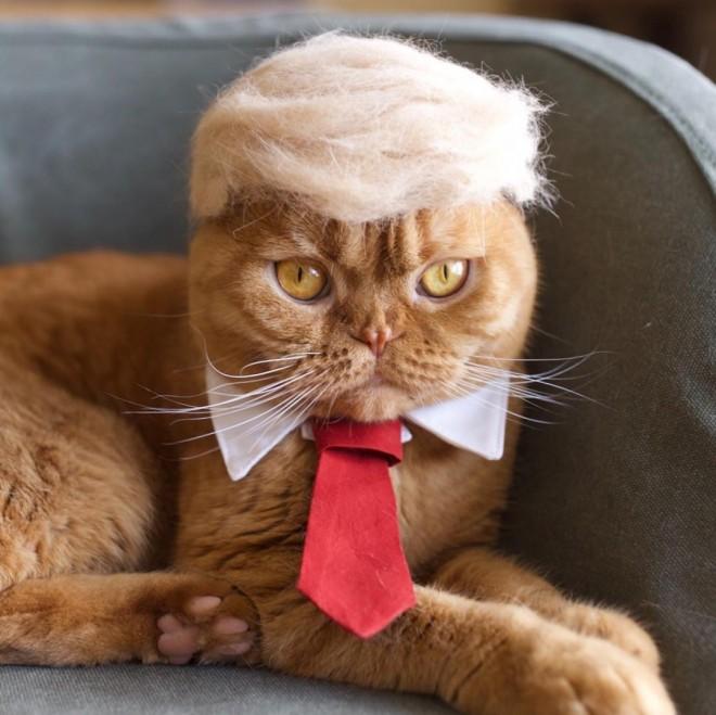 #ドニャルドトランプ #trumpyourcat
