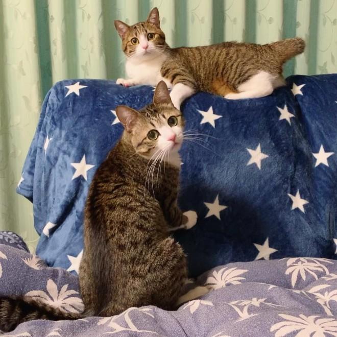 インスタで人気のスター猫・すずめ&うなぎ(@suzume0513)