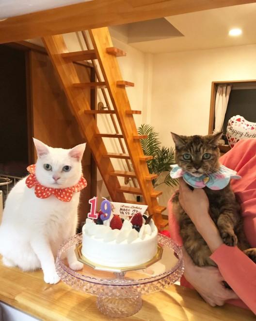 先日19歳の誕生日を迎えたモコ(写真右)
