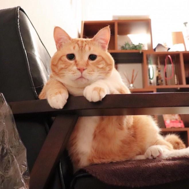 飼い主さんの愛を一身に受けるぐっぴーの猫生